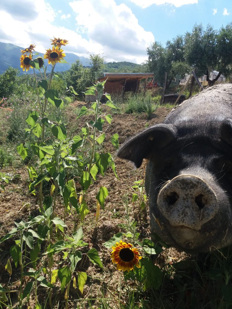 Organic farmcamp