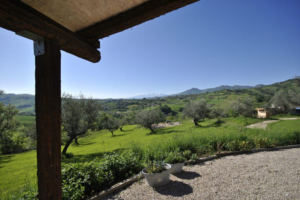 vieuw olive trees