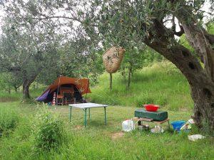 Campeggio tra le olive