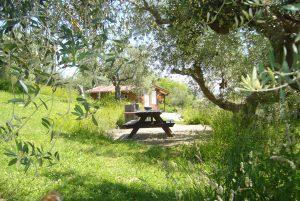 Casetta in legno, olive, natura