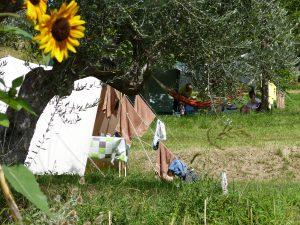 Campeggiare tra le piante d'olive