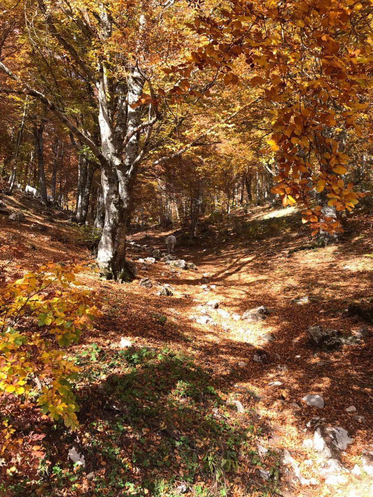 herfst in Gran Sasso
