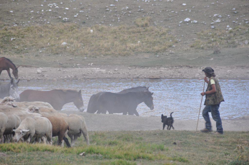 Schaapherder in bergen