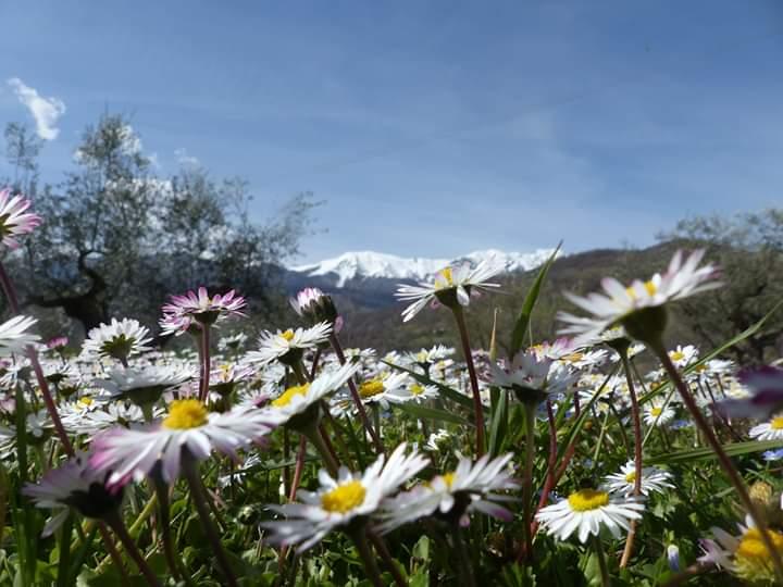 Voorjaar Rocca di Sotto